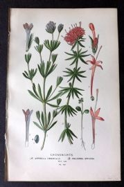 Step 1896 Antique Botanical Print. Crossworts 123